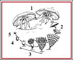 miből indulnak ki a pinwormok milyen gyógyszereket alkalmaznak az ascariasis ellen