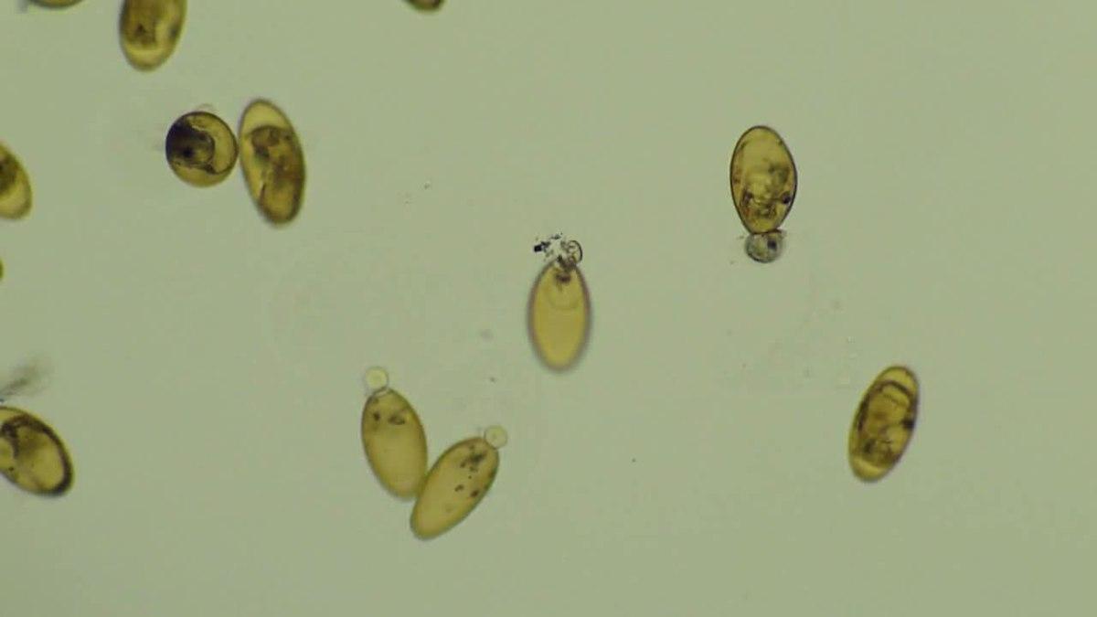 paraziták flukes flukes