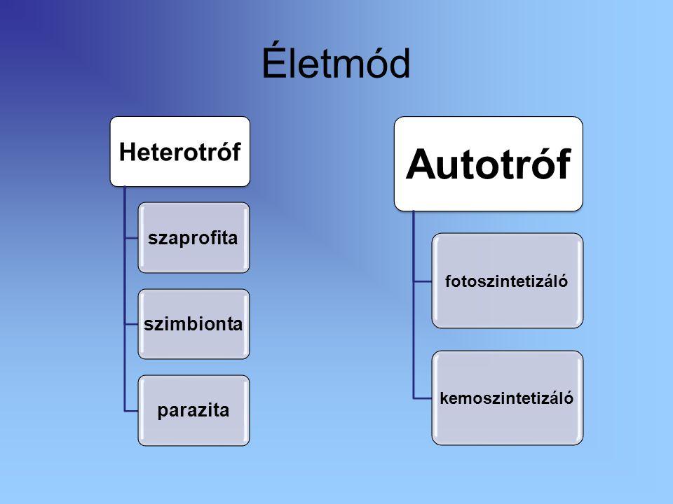 a paraziták heterotrófok vagy autotrófok a helminták okozta betegségek