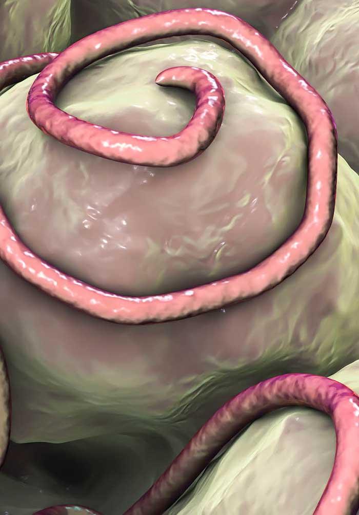 Ez a pinwormok elleni gyógyszer