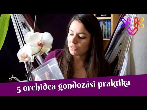 hogyan lehet kilábalni a parazitákból pinwormok segítenek
