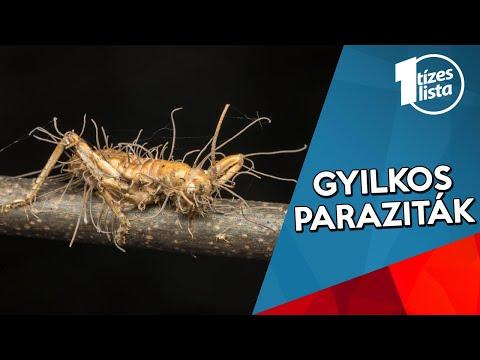 az emberi pinworm- fertőzés módjai parazita minden hős