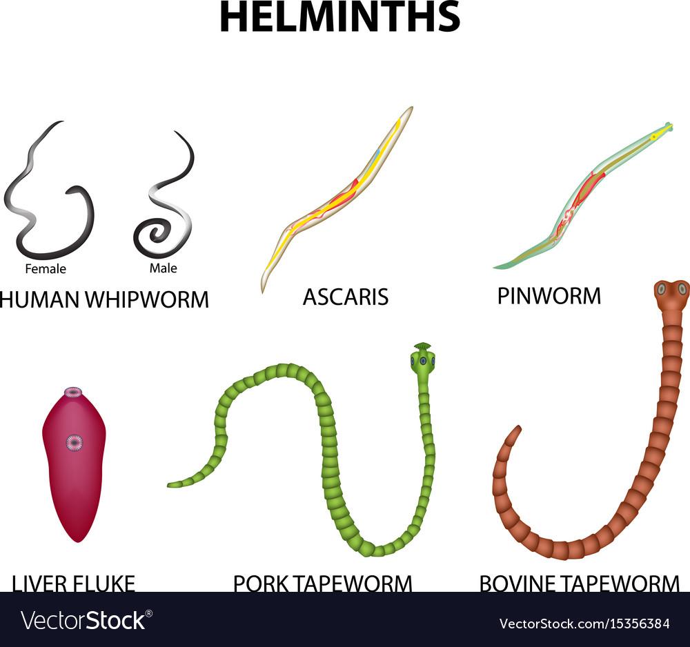 a pinworms ascariasis