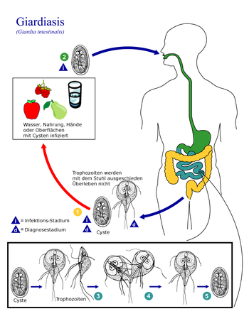 giardiasis emberekben kloramfenikol paraziták ellen