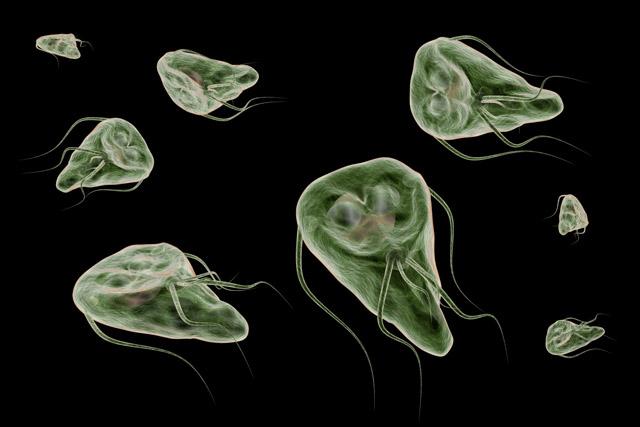 paraziták kesudiója az ujjakban élő paraziták