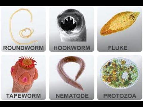 Gubarev helminták ismertek és ismeretlenek mit tegyek, ha parazitáim vannak