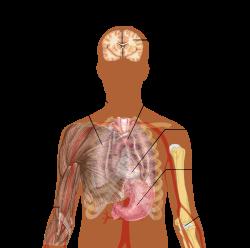 emberi tüdő paraziták