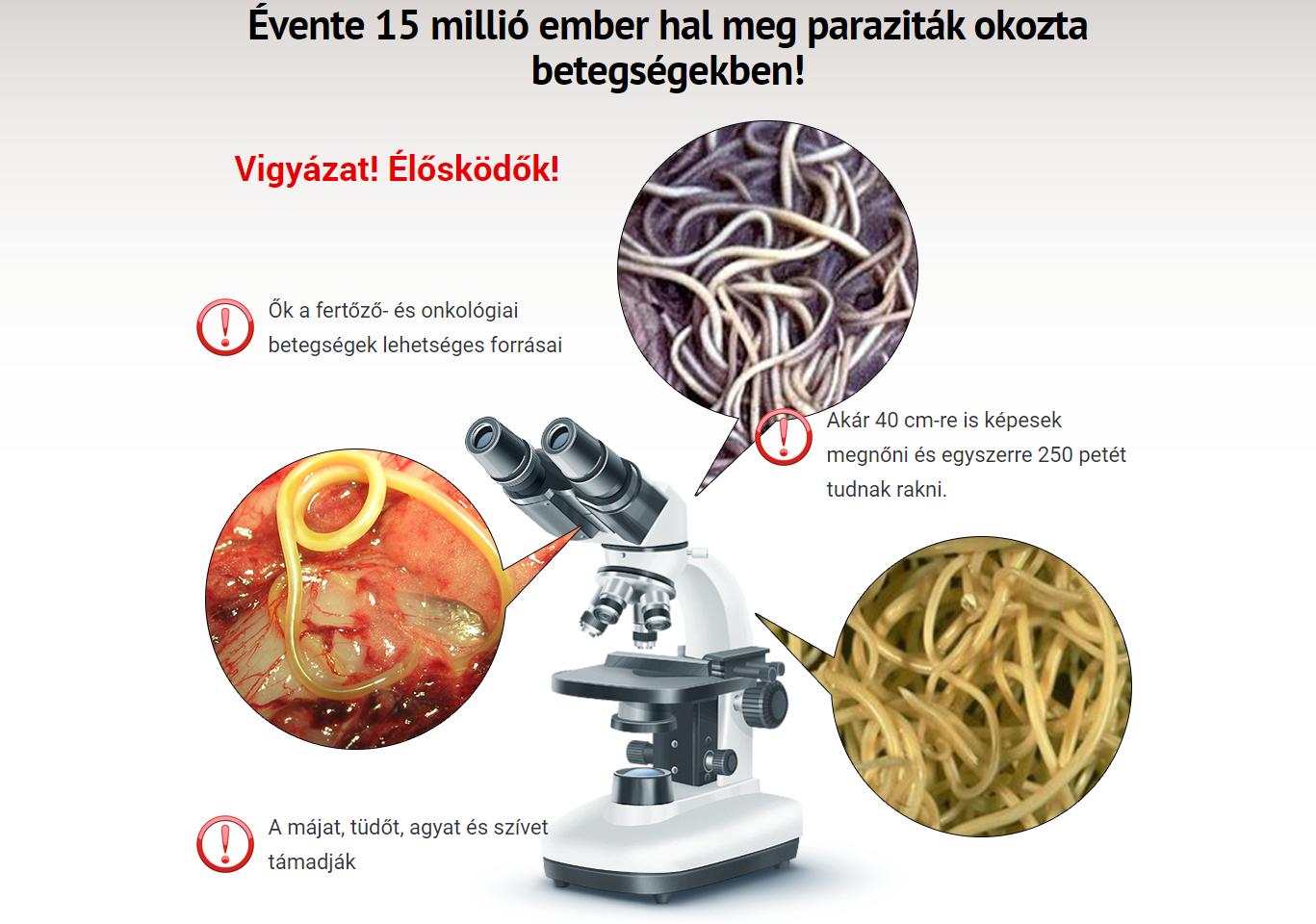 candida paraziták a testben az enterobiasis kezelésére szolgáló gyógyszerek