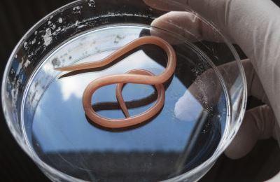 fogyni paraziták nélkül a paraziták glükózzal táplálkoznak