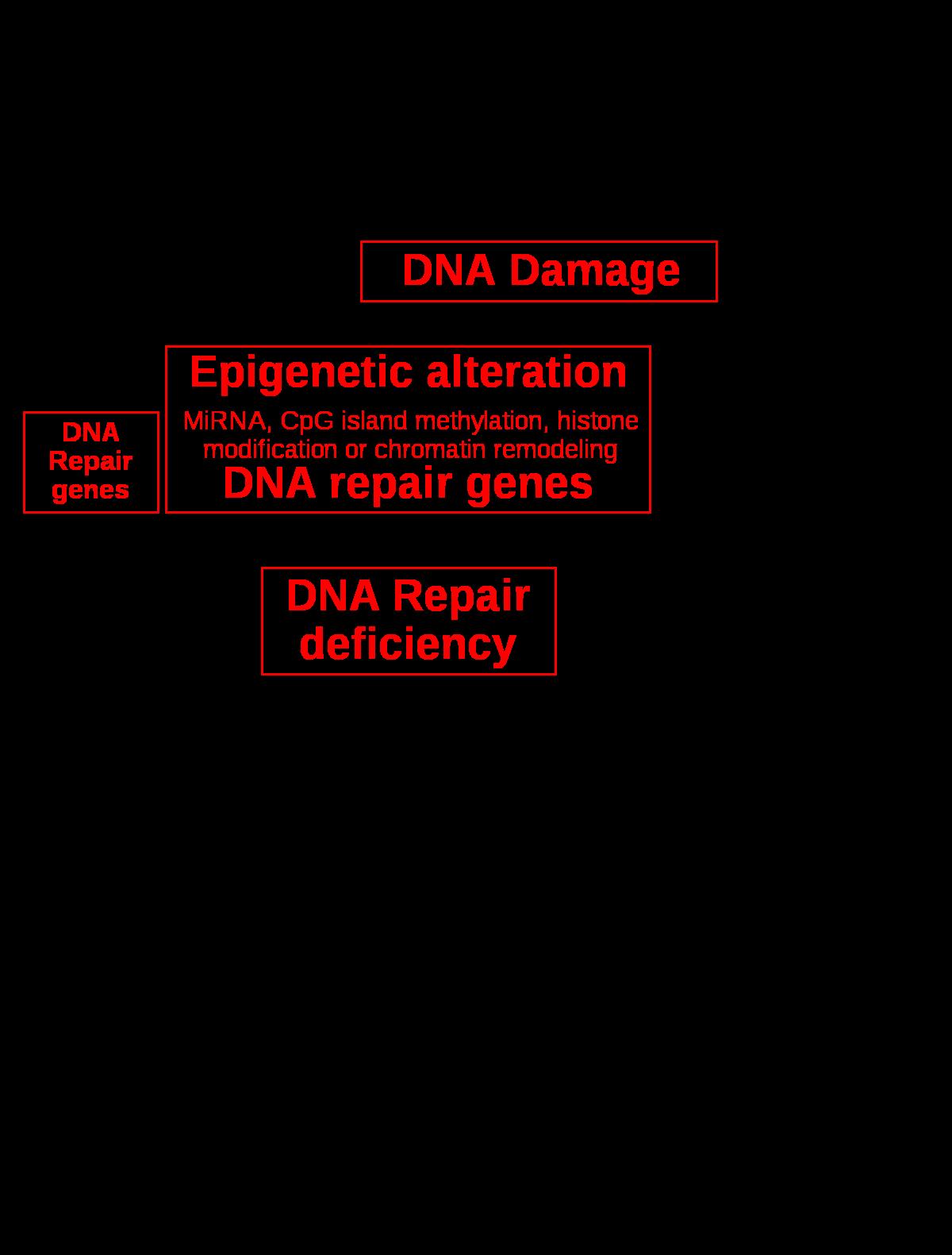 a paraziták befolyásolják a hatékonyságot endo és exo- paraziták
