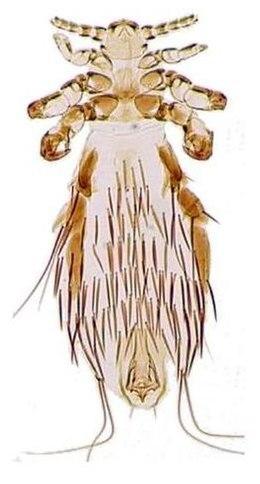 rotifer parazita paraziták elleni védekezés