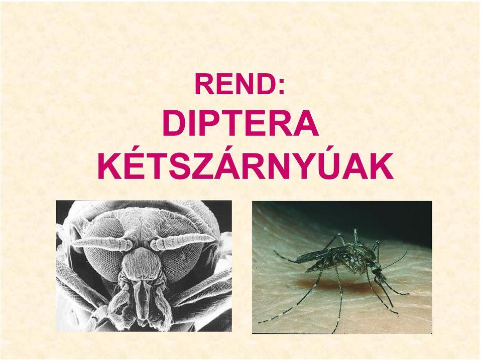a legrondább paraziták vegyes helminthiasis kezelés