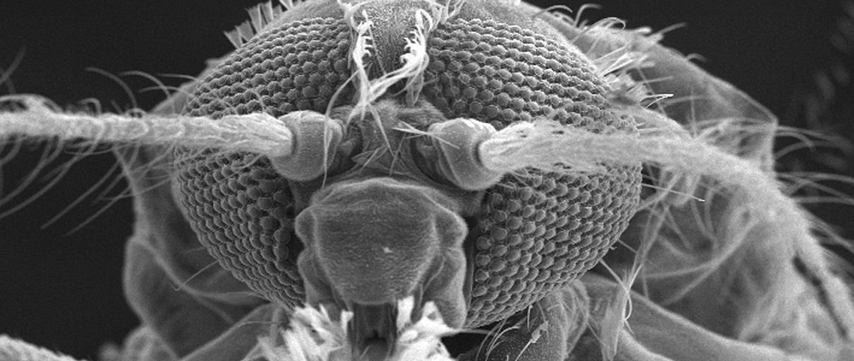 parazita a szemhéj tüneteiben parazitaellenes komplexek vélemények