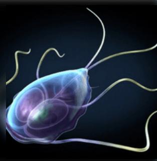 féreg parazita él egy személyben