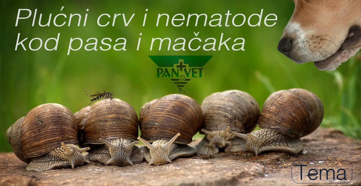 tó csádi paraziták pinworms örökre