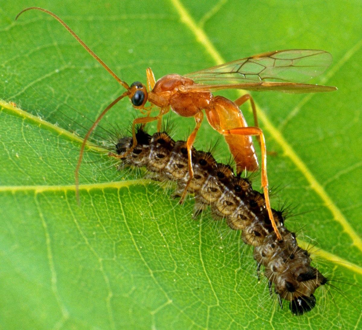 a szarvasmarha galandférge parazita paraziták kiutasításának felülvizsgálata