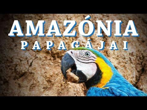 milyen parazita az amazon folyón