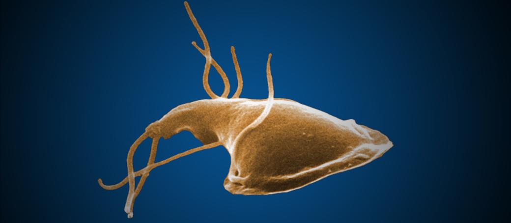 a parazitákról a testünkben
