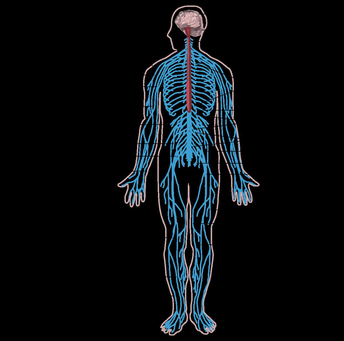 hogyan lehet kilábalni az emberi test parazitáiból a giardiasis tünetei felnőtt férfiaknál