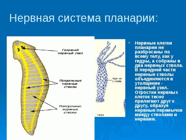 paraziták bőrének érzése a helminták jelenlétének tünetei