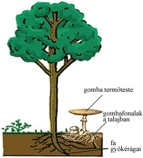 parazita szimbiózis