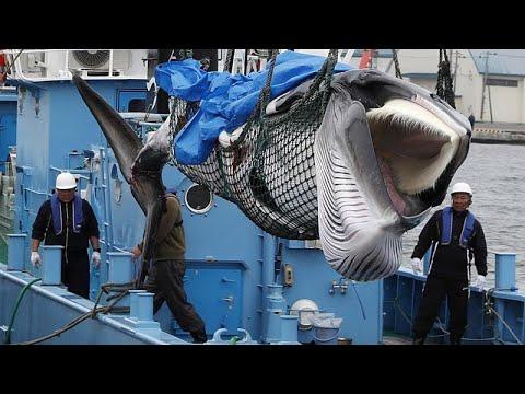 paraziták a gyilkos bálnán