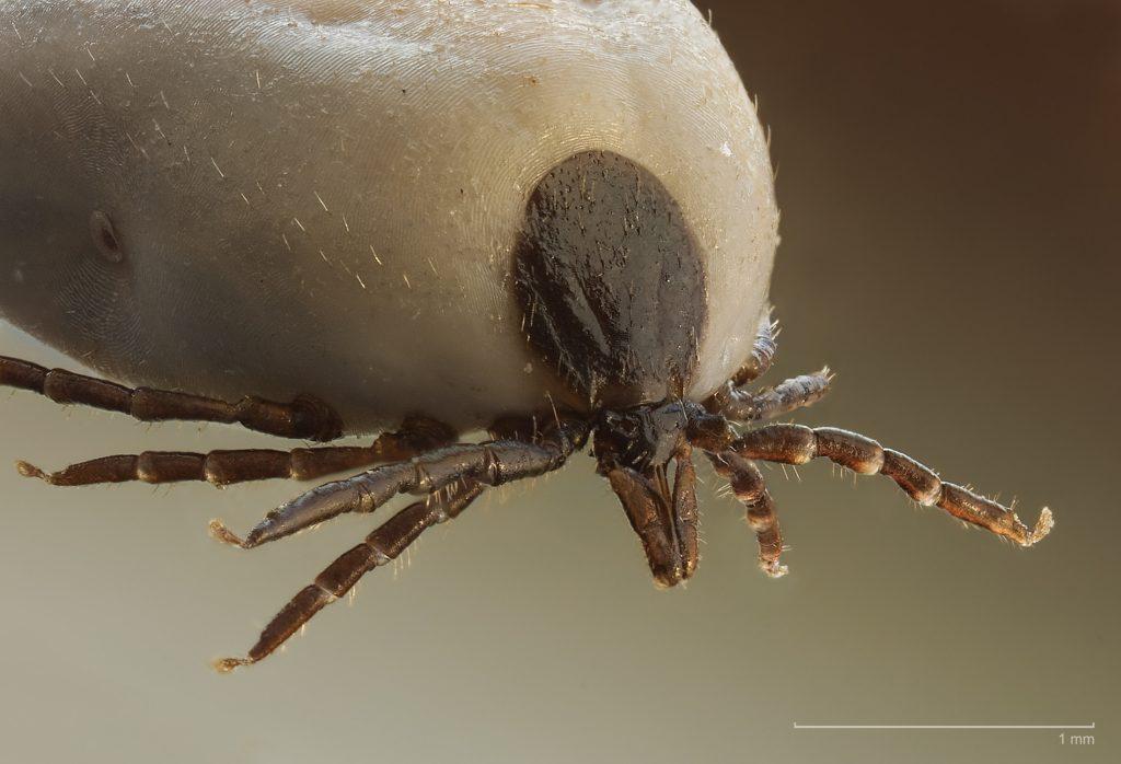 gömbféreg galandféreg a pinworm kezelés után viszkethet