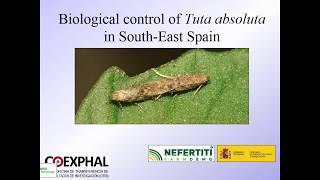 skála a parazitáktól pinwormok és petéik hőmérsékleten elpusztulnak