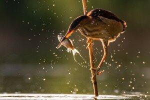 az ascaris féreg parazitál a testben