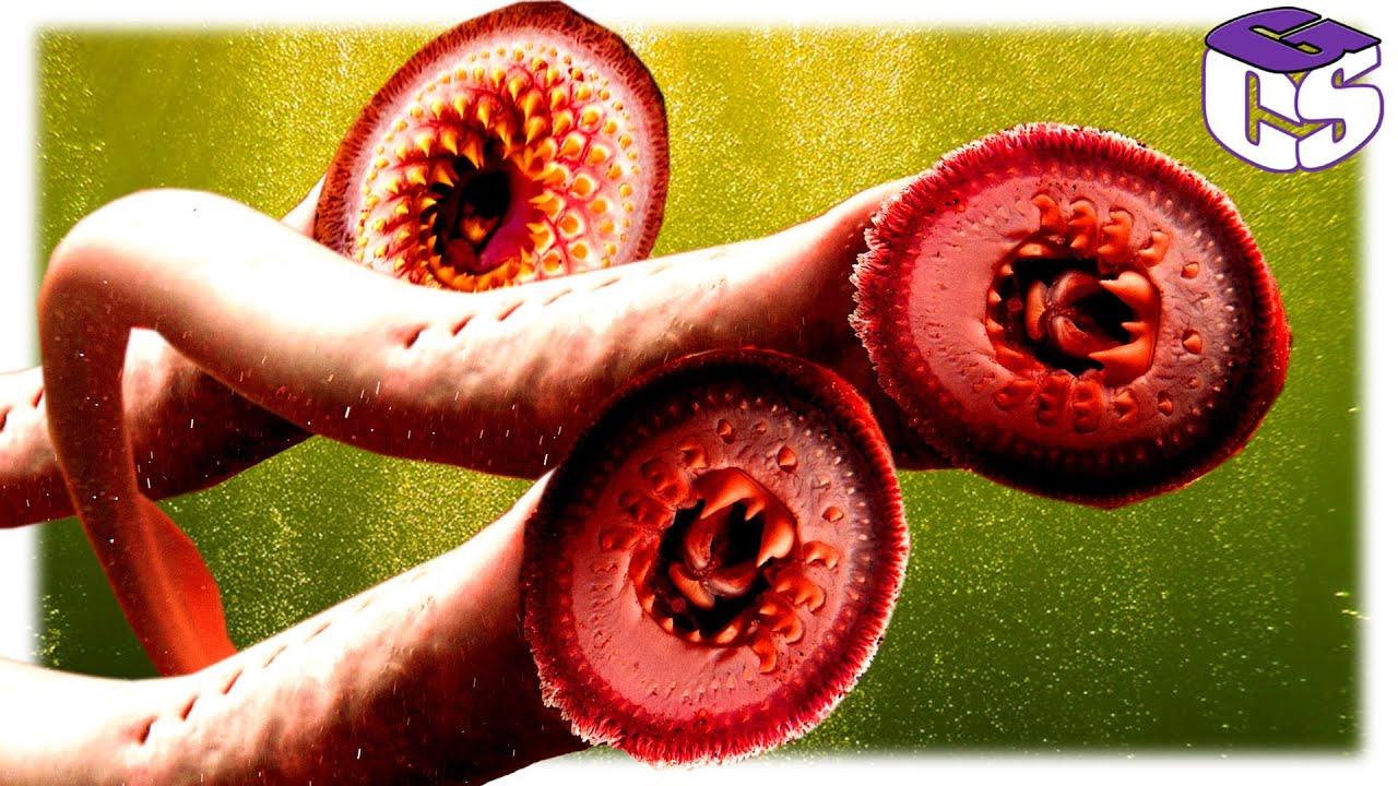 szubkután paraziták az emberi testen