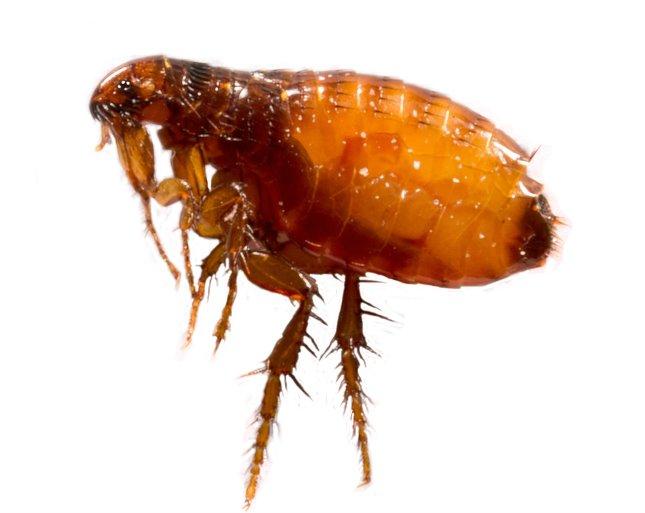 Parazita kutatási módszer - Helminth tojás kutatási módszerek - Gambar phylum nemathelminthes