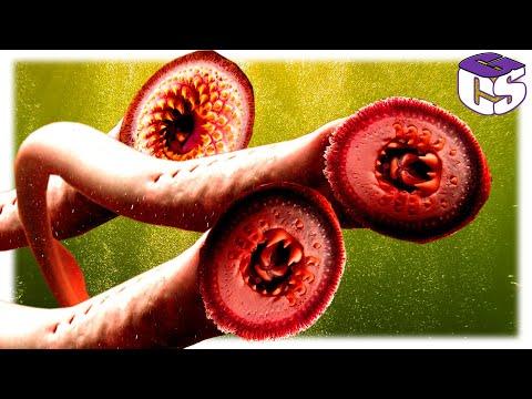 a paraziták megelőzése és kezelése a testben)
