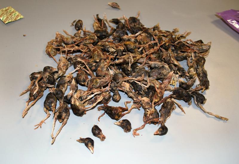 a pinwormnak testürege van mcdonald havas parazitái