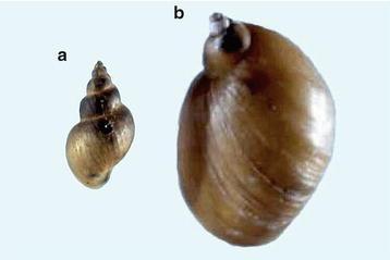 lamblia és pinworms hogyan kell kezelni kezelje a rossz lehelet okát
