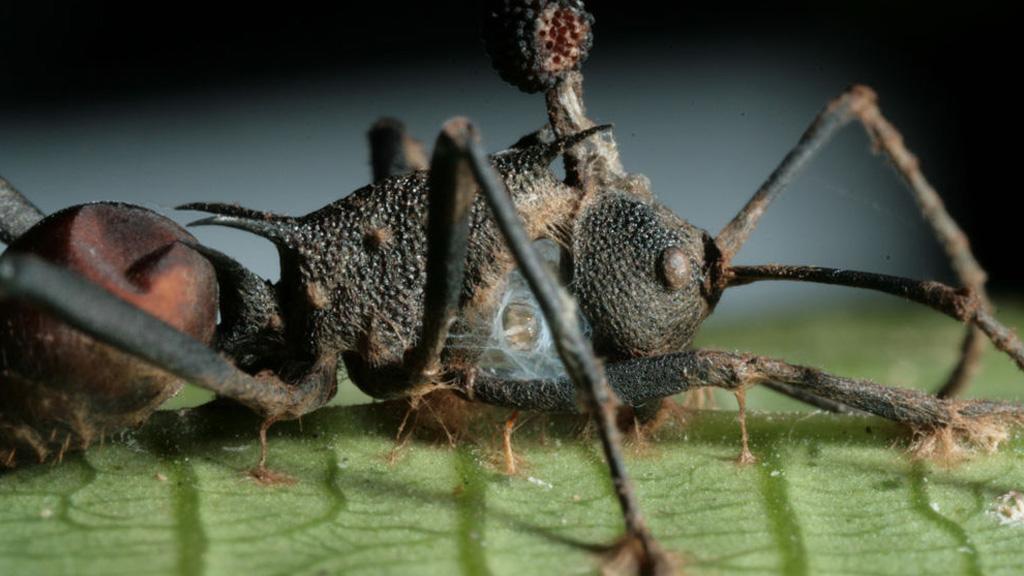 paraziták hogyan lehet élve megenni)