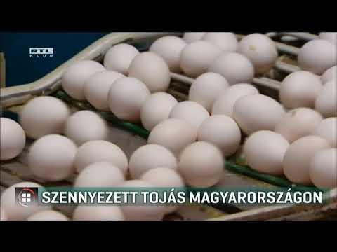 kerekféreg tojás meg nem termékenyített tojás