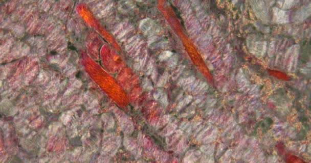 paraziták a sündisznókban