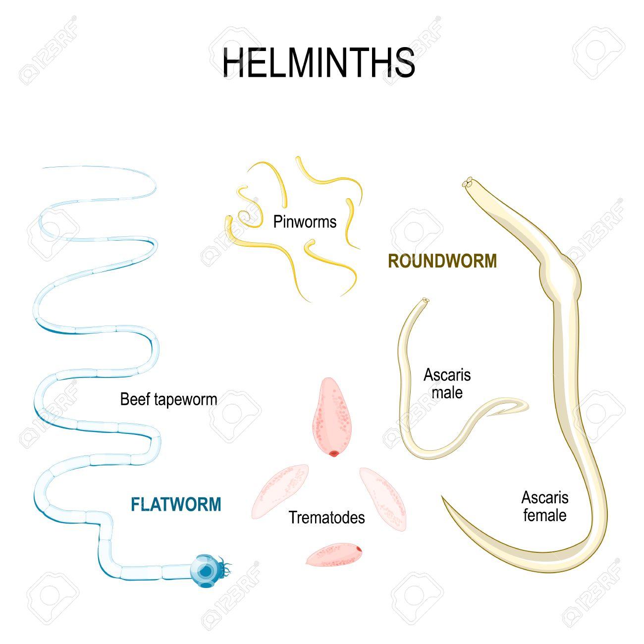 a test eloskodoi elleni kuzdelem helminthology ebook