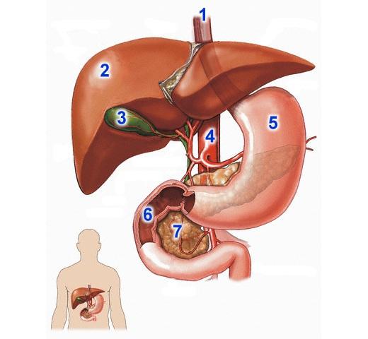 paraziták a tüdőben és a hörgők tünetei a pinwormok elleni gyógyszer neve